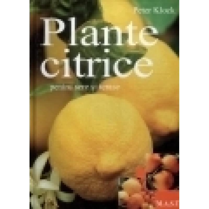 Plante citrice in apartamente,sere si gradini 1